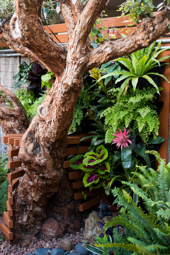 Guava Tree Table and Living Wall. Ryan Benoit Design, 2013.