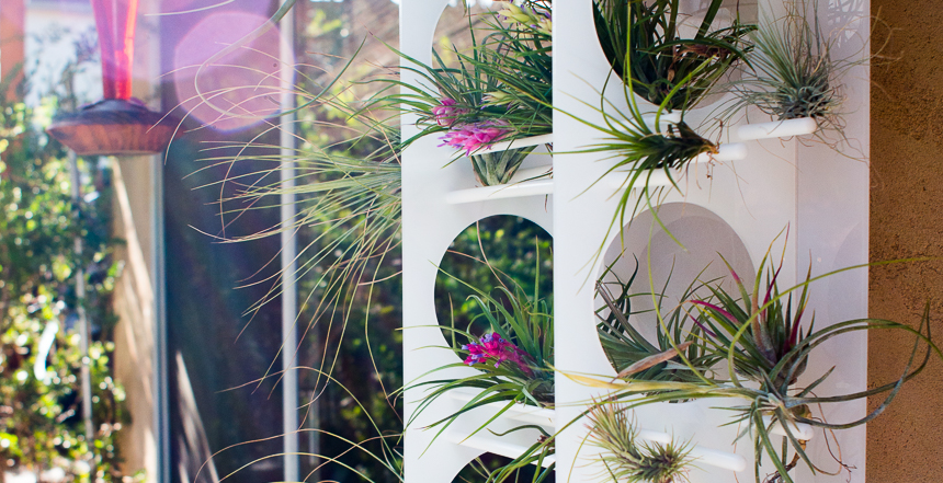 Acrylic-Tillandsia-Tower-Ryan-Benoit-Design-RMB_1664-2